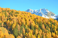 Swiss Alps in the Fall Stock Images
