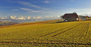 Swiss alps with farmhouse seen from Zimmerwald Stock Photo