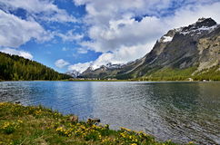 Swiss Alps-lake Silvaplana Stock Photos
