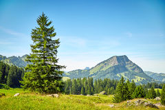 Swiss Alps landscape Royalty Free Stock Images