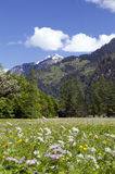 Swiss Alps Spring Meadow with Mountain view Stock Images
