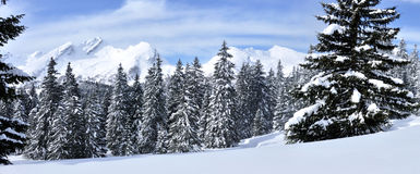 Swiss alps panorama 1b. Swiss alps panorama from the forest near to San Bernardino Royalty Free Stock Image