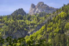 Swiss Alps seen through forest in Blausee or Blue Lake nature park in summer, Kandersteg, Switzerland Royalty Free Stock Images