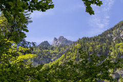 Swiss Alps seen through forest in Blausee or Blue Lake nature park in summer, Kandersteg, Switzerland Stock Photos
