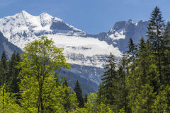 Swiss Alps seen through forest in Blausee or Blue Lake nature park, Switzerland Royalty Free Stock Photos