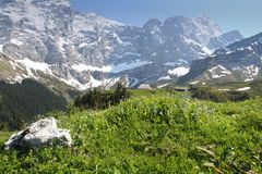 Swiss Alps in summer Stock Image