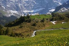 Swiss Alps in summer royalty free stock image
