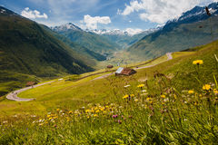 Swiss alps view from Oberalppass, flowers, barn Stock Images