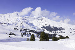 Swiss Alps in Winter. Pine trees in swiss snow-covered mountain with clouds floating low Stock Images