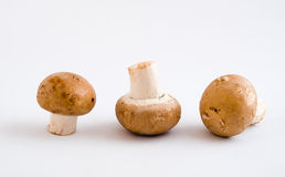 Swiss Brown Button Mushrooms Stock Photos