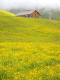 Swiss chalet in the yellow meadow Royalty Free Stock Photography