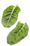 Swiss chard. Garden fresh Swiss chard leaves on white with clipping path stock photography