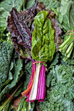 Swiss Chard Stock Images