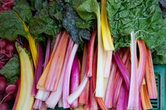 Swiss Chard Stock Photography