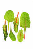 Swiss chard (Beta vulgaris) Royalty Free Stock Images