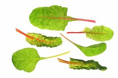 Swiss chard (Beta vulgaris) Stock Photography
