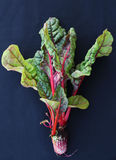 Swiss chard Royalty Free Stock Photography