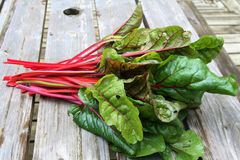 Swiss Chard Royalty Free Stock Image