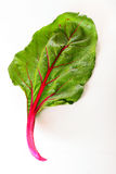 Swiss chard isolated on white Royalty Free Stock Photo