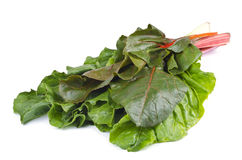 Swiss Chard Isolated on White. A bunch of fresh Swiss Chard on white background Stock Images