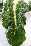 Swiss Chard Leaf Stock Photography