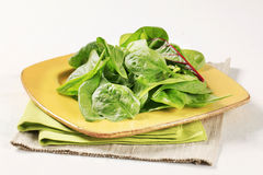 Swiss chard leaves Royalty Free Stock Photography