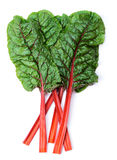 Swiss chard. Mangold or Swiss chard leaves isolated on white royalty free stock photo