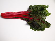 Swiss Chard. Organic locally grown farm fresh gourmet red rainbow Swiss chard royalty free stock photo