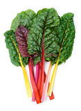 Swiss chard Rainbow Royalty Free Stock Images