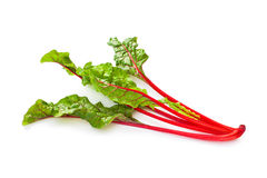Swiss chard vegetable Stock Image