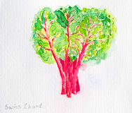 Swiss chard watercolor painted Royalty Free Stock Photography