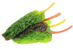 Swiss chard in a white background Royalty Free Stock Photos