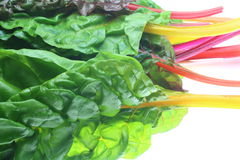 Swiss chard in a white background Stock Images