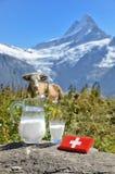 Swiss chocolate and jug of milk Royalty Free Stock Photos