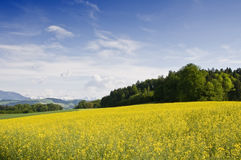 Swiss countryside. Typical spring fields in the swiss landscape Stock Photo
