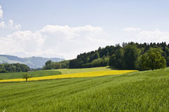 Swiss countryside. Typical spring fields in the swiss landscape Royalty Free Stock Images