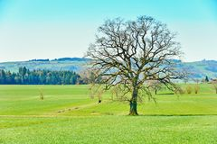 The Swiss Countryside Royalty Free Stock Image