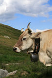 Swiss cow Stock Photography