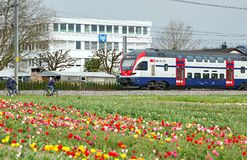 Swiss double-deck train passing by the field of tulips. Town of Cham, canton of Zug, Switzerland. CHAM, SWITZERLAND - APRIL 15, 2018. Swiss double-deck train royalty free stock images