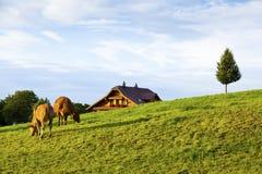 Swiss Farm in Kriens Countryside Stock Image