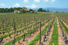 Swiss farms and vineyards Royalty Free Stock Image