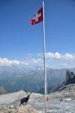 Swiss Flag Royalty Free Stock Photos