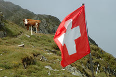 Swiss flag and cow on meadow. Royalty Free Stock Photo