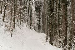 Swiss forest covered in snow. A Swiss forest covered in snow during winter Royalty Free Stock Images