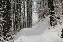 Swiss forest covered in snow during winter. A Swiss forest covered in snow Royalty Free Stock Images