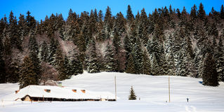 Swiss Forest In Winter Royalty Free Stock Photos