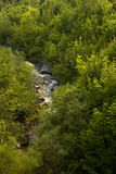 Swiss forrest with river Stock Image