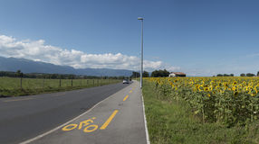 Switzerland, Geneva - Field of sunflowers near the road Royalty Free Stock Photography