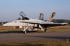 Swiss Hornet Royalty Free Stock Photography