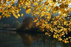 Swiss Lace de Lucelle en un marco de oro de las hojas de otoño Imagen de archivo